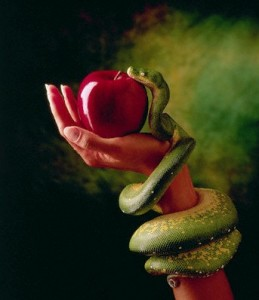 1995 --- Snake and Forbidden Fruit --- Image by © Don Mason/CORBIS