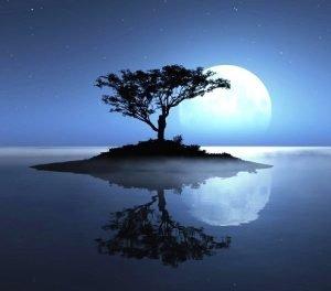 lua-agua-arvore
